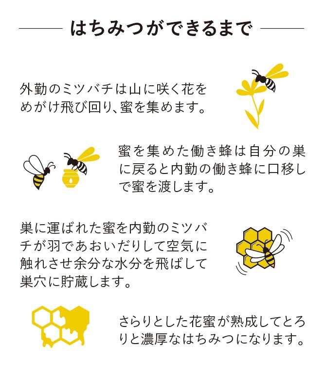 はちみつができるまで。 外勤のミツバチは山に咲く花をめがけ飛び回り、蜜を集めます。蜜を集めた働き蜂は自分の巣に戻ると内勤の働き蜂に口移しで蜜を渡します。巣に運ばれた蜜を内勤のミツバチが羽であおいだりして空気に触れさせ余分な水分を飛ばして巣穴に貯蔵します。さらりとした花蜜が熟成してとろりと濃厚なはちみつになります。